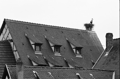 Stork in Alsace