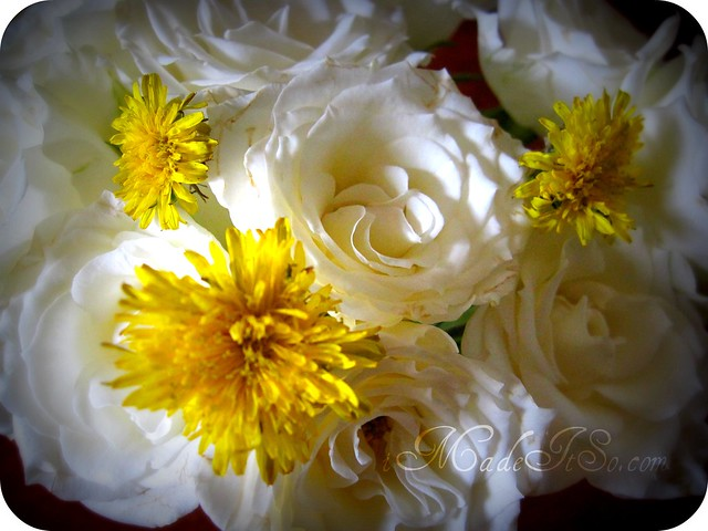 dandelions amongst the roses