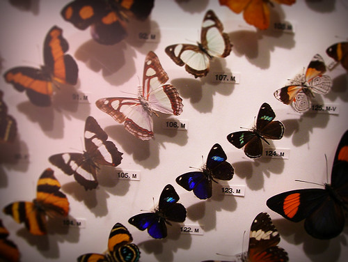 Day 340 - Butterfly Display