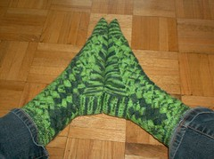Crocodilian Socks - Done
