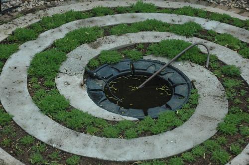 garden in may 004