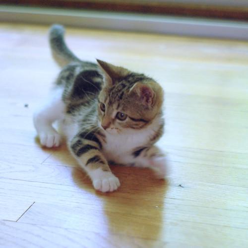 sophie cat