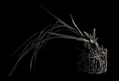 Natural Sculpture. (kevsyd) Tags: stilllife rootball 645d kevinbest