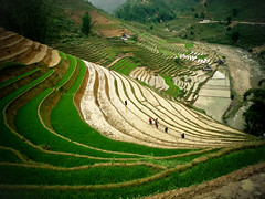 Paddy fields around Sapa (Keewon) Tags: asia rice vietnam asie sapa paddyfield 2011 rizière