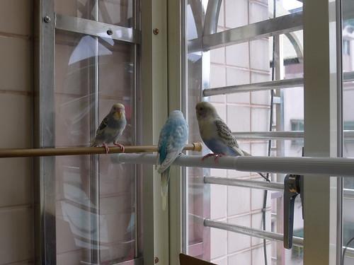 房間的小陽台 (改裝成大型鳥籠)