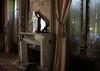 (_wysiwyg_) Tags: windows abandoned mirror fireplace decay forgotten villa shutters curtains disused mansion miroir maison derelict volets ue verlassen cheminée fenêtres urbex rideaux trimmings oublié abandonné persiennes passementerie désaffecté explorationurbaine villaamélie