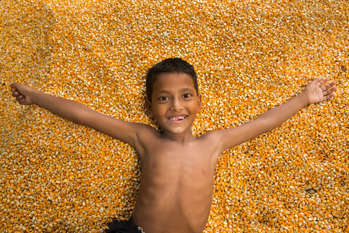 Corn Harvesting Joy