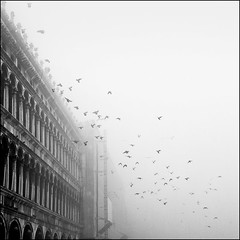 Fogbound (MaggyMorrissey) Tags: venice italy birds fog pigeons piazzasanmarco stmarkssquare