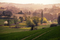spring has arrived (Dennis_F) Tags: trees sunset tree nature colors zeiss landscape spring sonnenuntergang sony natur feld felder fields fullframe dslr karlsruhe landschaft bume baum deers bunt farben frhling 135mm rehe abends weingarten kraichgau 13518 a850 sonyalpha sonydslr vollformat cz135 zeiss135 dslra850 sonya850 sonyalpha850 alpha850 sony135 sonycz135