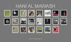 ok (HANI AL MAWASH) Tags: 2 6 3 art photo al 10 5 4 7 8 9 kuwait hani  1color artphoto      mywinners  aplusphoto kuwaitphoto   almawash kuwaitartphoto kuwaitart  mawash