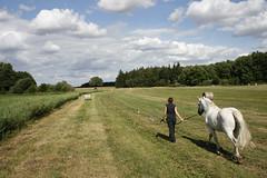 Frau Weg Wiese Himmel Wolken Schimmel Kter (feldweg) Tags: horse caballo cheval wiese himmel wolken frau cavallo pferd hest weg vorpommern kon mecklenburgvorpommern schimmel kter bmitz