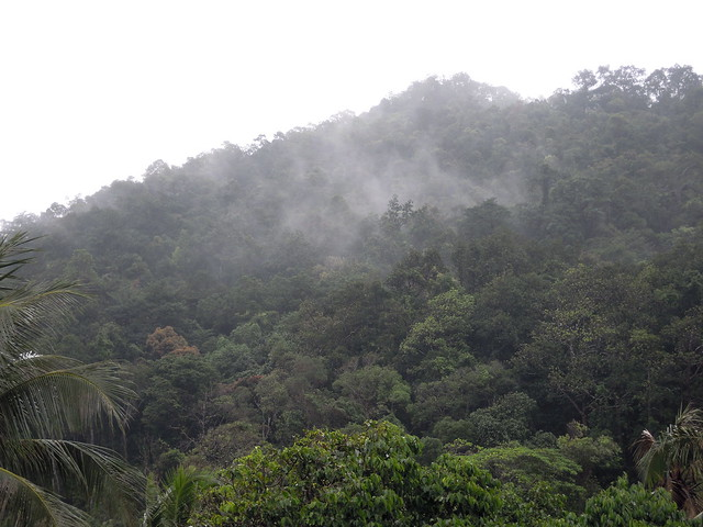rainforest after the rain