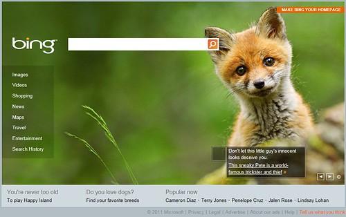 bing-fox