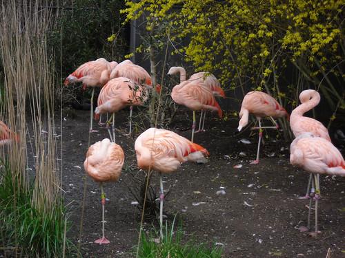 woodland park zoo 26