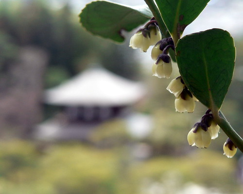 Ginkaku-ji framed by small bell-shaped flowers