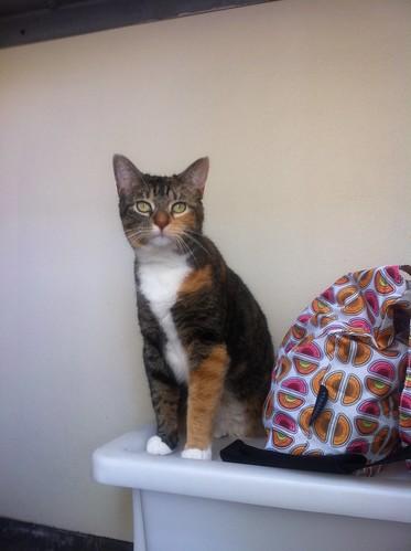 两只猫的战争 - 艾小柯 - 流浪者的乡愁