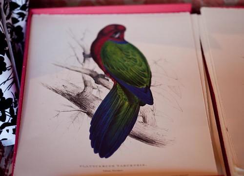 parrot book