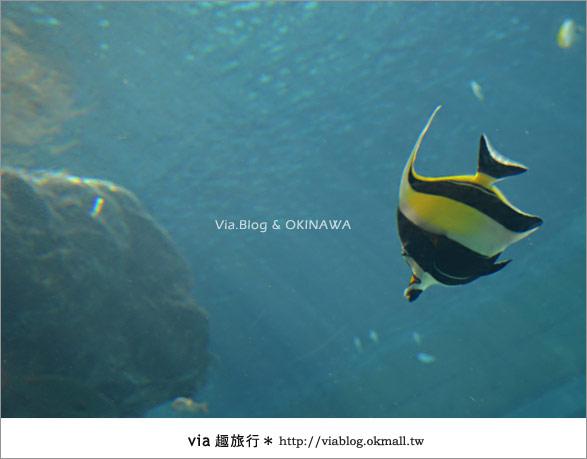 【沖繩景點】美麗海水族館~帶你欣賞美麗又浪漫的海底世界!11