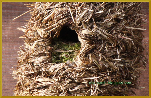 Wren Nesting in a Roosting Pocket