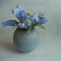 [フリー画像] 花・植物, ユリ科, ムスカリ, 勿忘草・ワスレナグサ, 花瓶, 青色の花, 201104091900