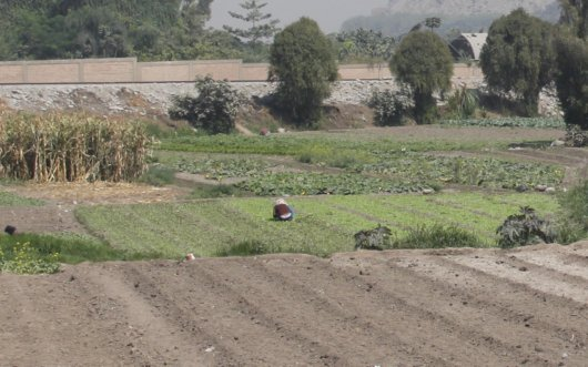 Urban Agriculture Reversed in Peru