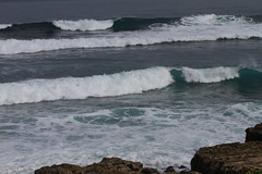 _MG_2566 (Anna Kipervaser) Tags: ocean beauty island hawaii peace oahu tranquility snorkeling pele monkseal