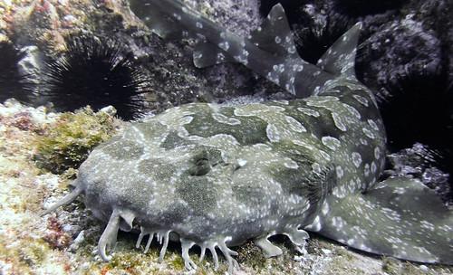 Fish Rock -1