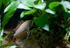 Aquarium 04_2011-5