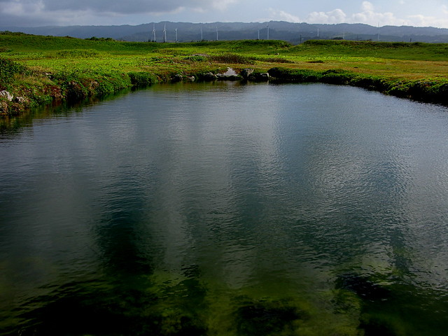 Freshwater pond in Kahuku