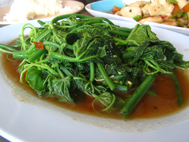 Stir fried bitter melon leaves (pad pak yot mala ผัดยอดมะระ)