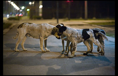 pups & their mother (OverdeaR [donkey's talking monkey's nodding]) Tags: street urban dogs canon pups puppies homeless serbia streetphotography pack 5d usm belgrade beograd srbija 8518 belgradestreetdogs