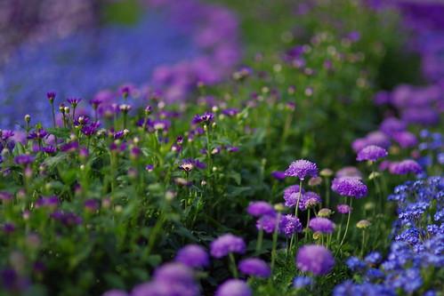 flower garden 2011