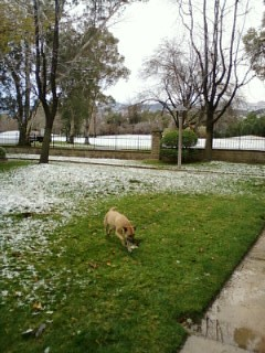 Photo085.1.jpg - Snow Valencia