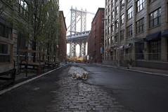 Easter 2011 in DUMBO (epc) Tags: dog newyork dogs goldenretriever dumbo manhattanbridge frisket goldenretrievers washingtonstreet brooklynny brooklynwaterfront dumbobrooklyn dumbonyc