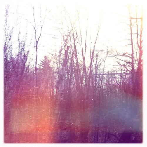 Random bit of forest.