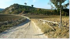 Terre di Maremma - Maremma's lands (Jambo Jambo) Tags: italy panorama landscape nikon italia hill tuscany toscana grosseto collina maremma arcille baccinello jambojambo stradafronzina