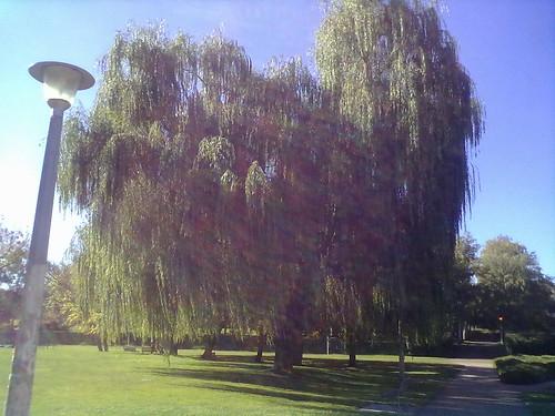 Autumn ANU 3