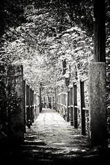 IMG_4710-3 Footbridge in Pontyberem (Malcolm Alce-King) Tags: wales pontyberem gwendraethvalley