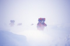 Skiing in Blizzard (Weber Arctic Expeditions) Tags: ice richard misha weber northpole frostbite arcticocean polarexpedition malakhov wardhuntisland fischerskis polarbridge polartraining capearkticheskiy dimitrishparo shparo