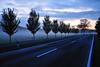 Kafkaesque Trees (dcbpix) Tags: blue autumn light sunset sky sun berlin fall fog germany season geotagged nikon flickr nightshot horizon scenic best german romantic geotag hue brandenburg twighlight fläming naturesfinest blueribbonwinner supershot abigfave nikond3 natureselegantshots dcbpix