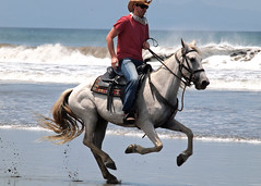 Rookie of the Day: Andrew (Out of the Blue Photography) Tags: ocean horse beach del cowboy san do waves tour juan pacific boots things riding sur nicaragua cowgirl adrenaline horseback saddle horsebackriding survivor canter rancho gallop ecotour chilamate ranchochilamate horsebackrideonthebeach