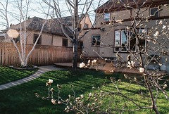 neighbors' backyard (pwners_manual) Tags: trees film 35mm sunsets lensflare highlandpark fujicolor200 pentaxmesuper stp mayflowers springcolors quantaray28mm128