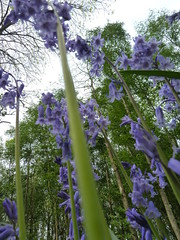 """Bluebells with the trees • <a style=""""font-size:0.8em;"""" href=""""http://www.flickr.com/photos/61957374@N08/5679689332/"""" target=""""_blank"""">View on Flickr</a>"""