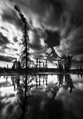 Spring Reflections (Wolfhorn) Tags: trees nature water alaska clouds reflections landscape blackwhite spring wilderness meltingsnow blackwhitephotos
