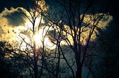 Brilliant Clouds (Truebritgal) Tags: blue sky sun tree nature silhouette clouds dark 50mm nikon bright sunny flare sunburst nikkor f18 d7000 truebritgal