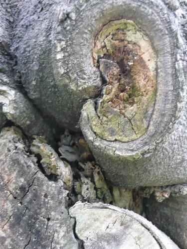 Wood Knot - Ta An Park
