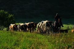 10-05-2011. Vereda de los toros desde la ganadería La Alpujarra, hasta el corral de La Jara
