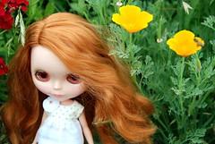 Clementine wildflower