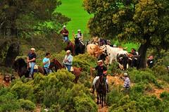 12-05-2011. Vereda de los toros desde La Jara hasta el corral de La Alpujarra
