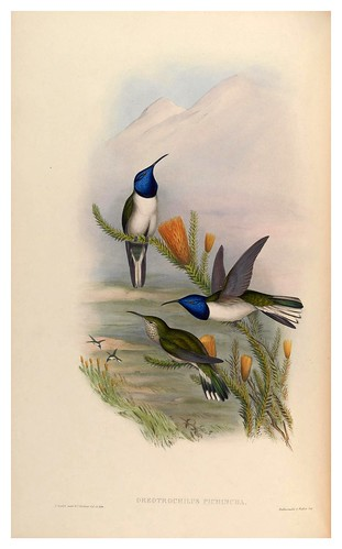 010-An introduction to the Trochilidae or family of humming-birds- Vol 2- 1861-John Gould